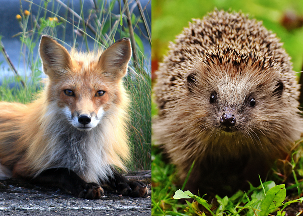 Foxes v. Hedgehogs and Issues Specialization in Congress